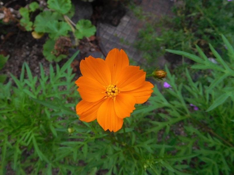 花の撮影中0207 (2)