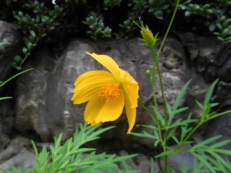 花の撮影中0207 (3)