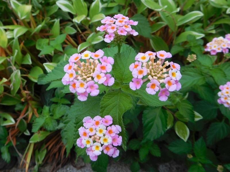 花の撮影中0207 (4)