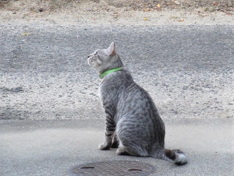 何見るネコ0209