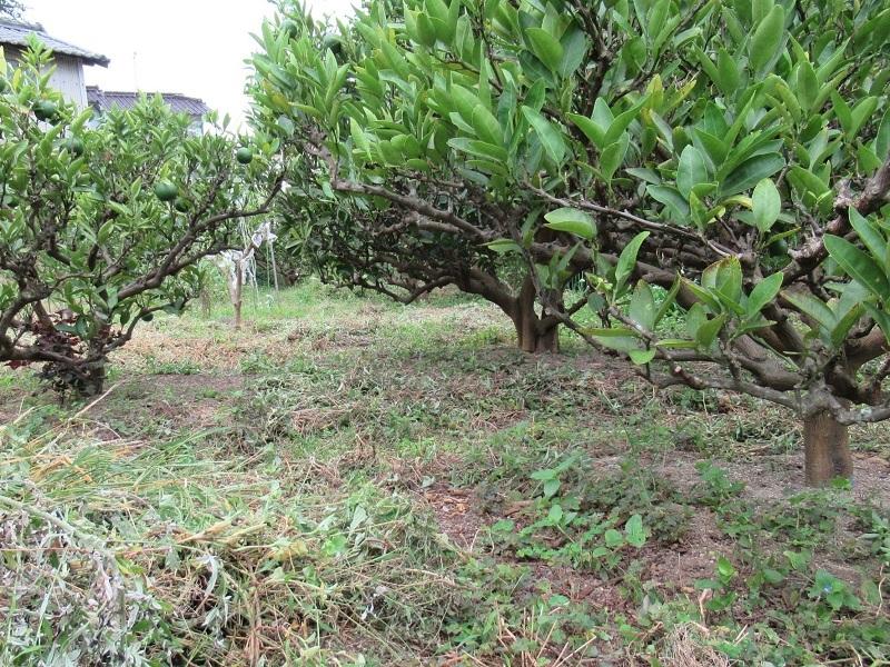 草刈り0209 (2)
