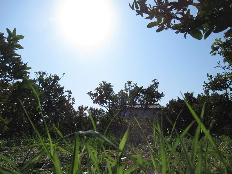 草刈り終了0302 (1)