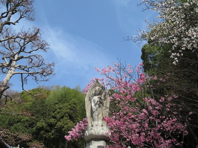 大宝寺0303 (1)