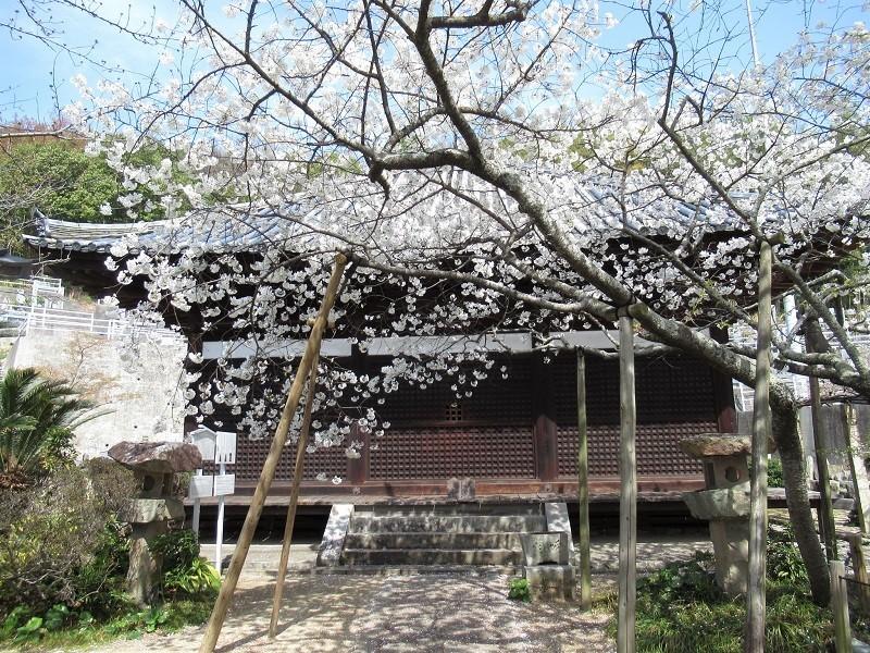 大宝寺0303 (3)