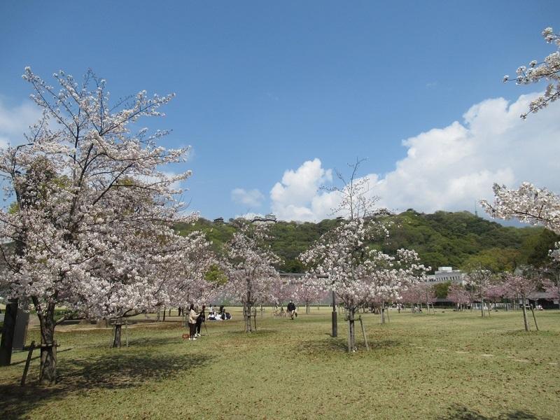 春のDIY 0303 (1)