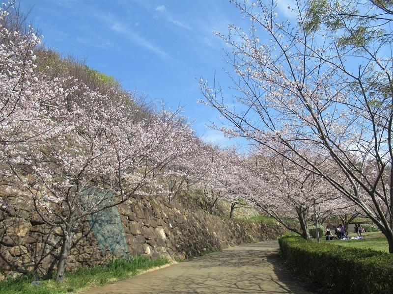 桜の季節0303 (2)