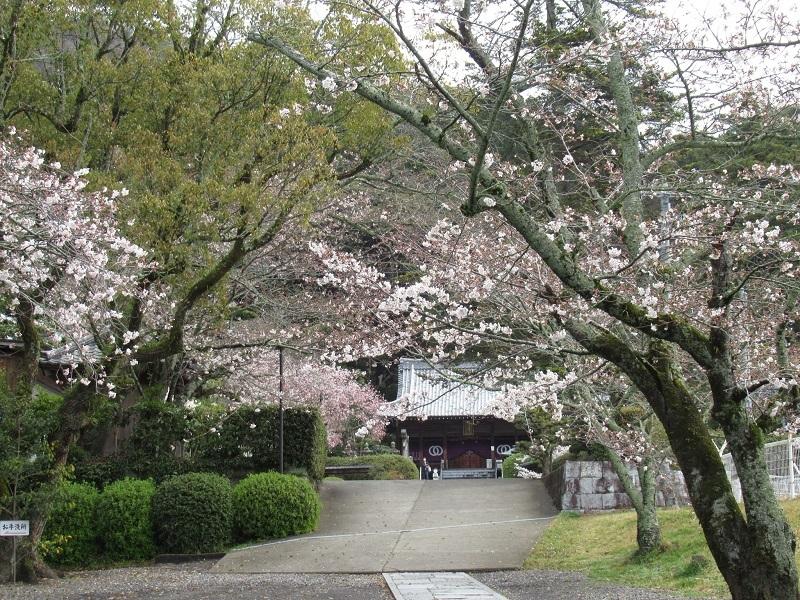 桜巡り0303 (2)