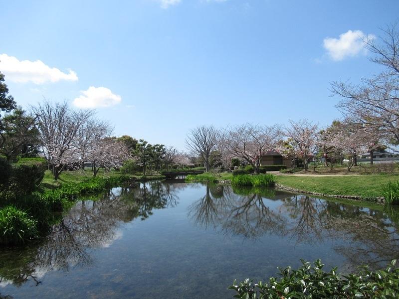桜巡り0303 (4)