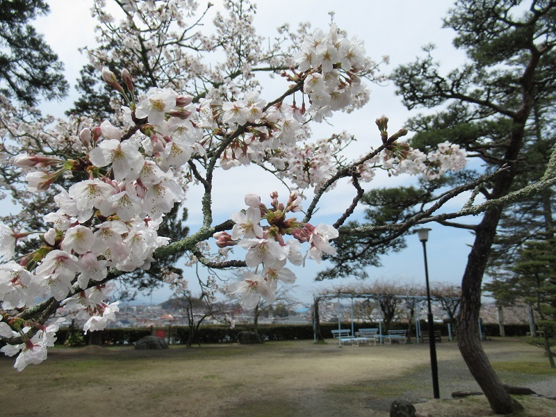 桜巡り0303 (3)