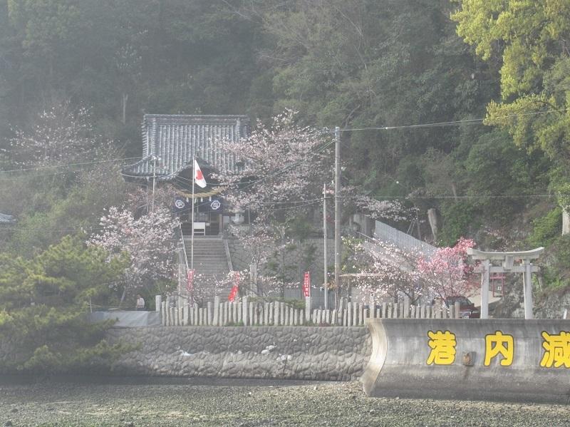 桜三昧0303 (3)