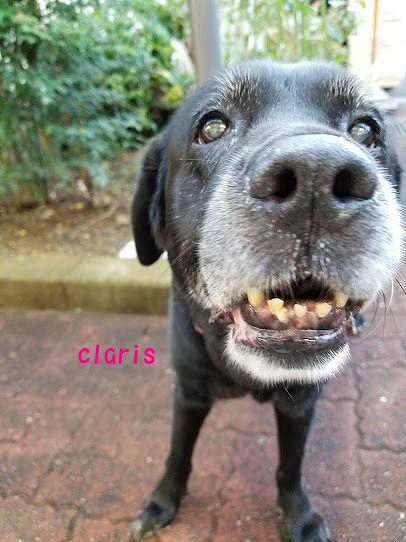 claris_20200907163015d1d.jpg