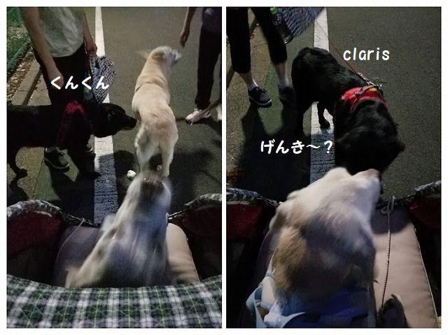 claris_2020091510291201b.jpg