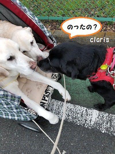 claris_20201023133721318.jpg