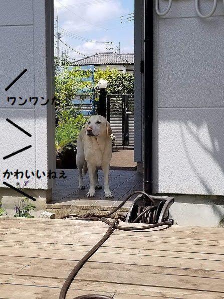 sakura_20200425134310331.jpg