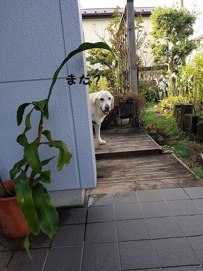 sakura_20200824131317ed1.jpg