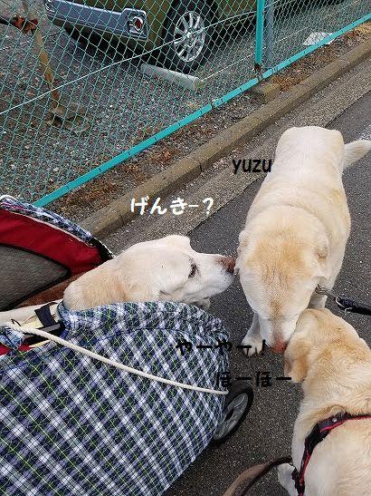 yuzu_20200430165740a32.jpg