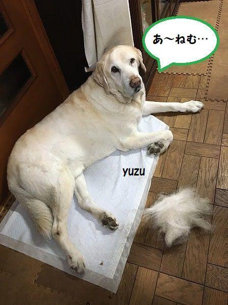 yuzu_20200523173605528.jpg
