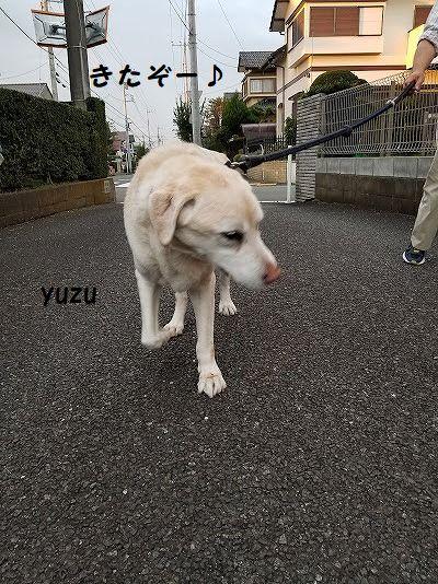 yuzu_202010121542025a3.jpg