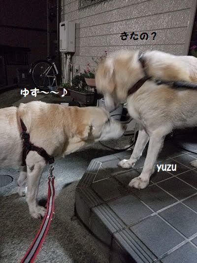 yuzu_20201107153124d21.jpg