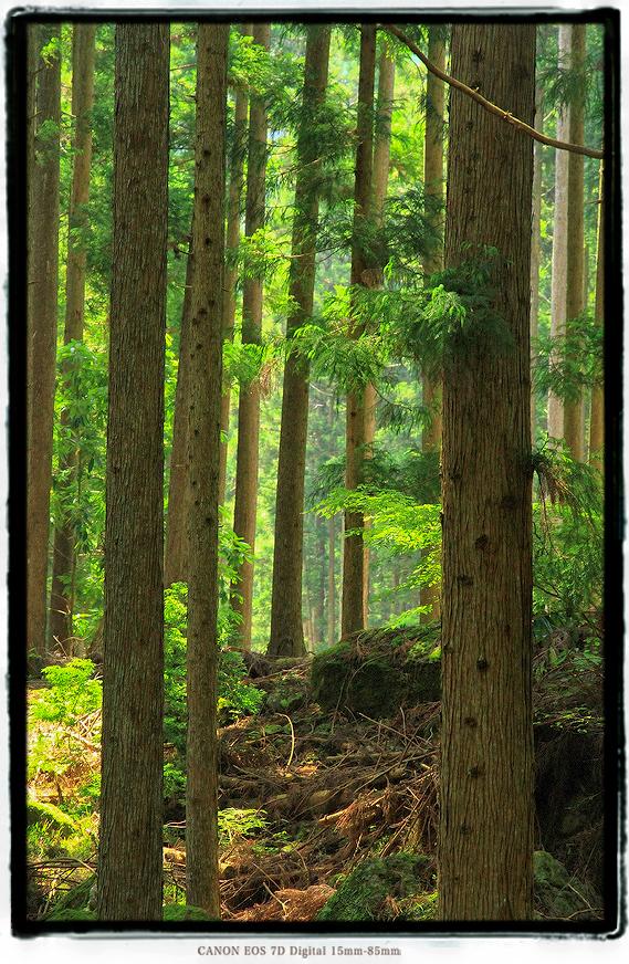 宇連廃村2006ure05.jpg