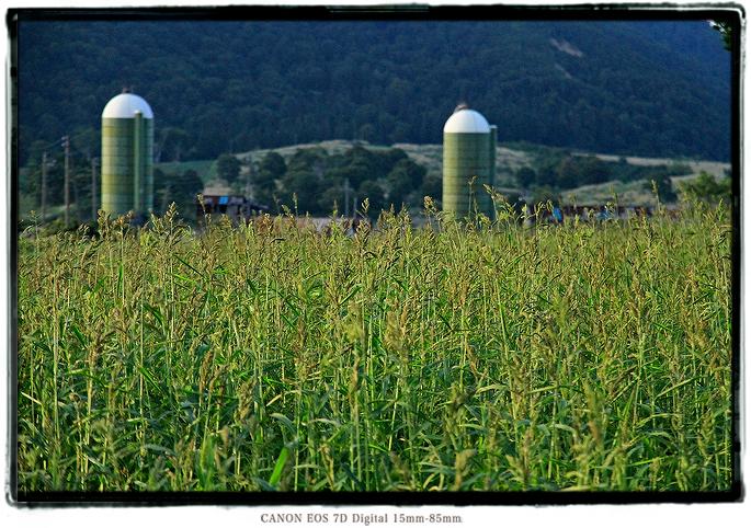 2009kfarm016.jpg