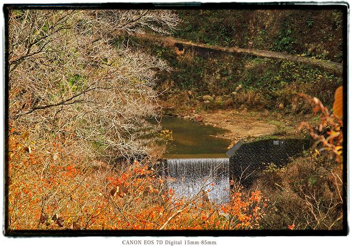 石川県大杉谷林道2011ishikawa03.jpg