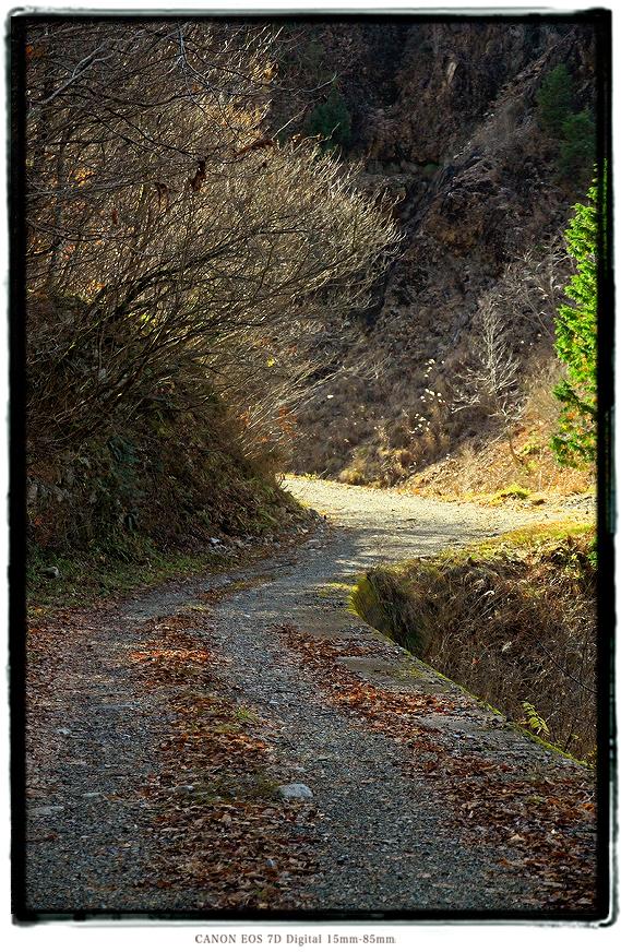 面谷林道2011omodani04.jpg