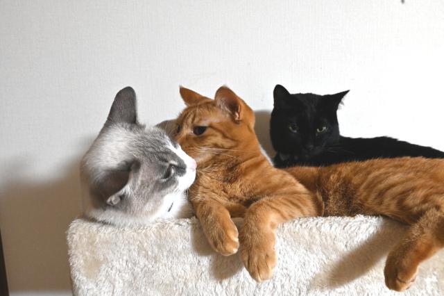 CatDensity2
