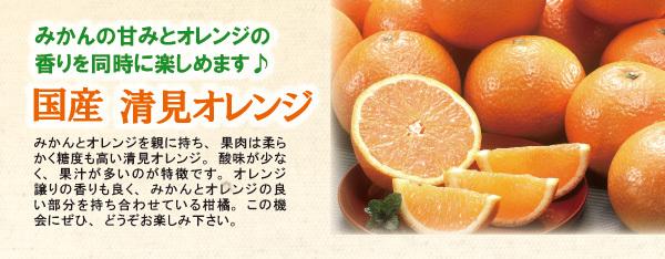 kiyomi600234 (1)