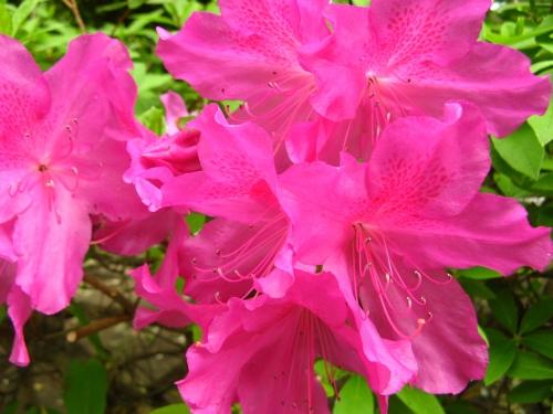 花の写真001