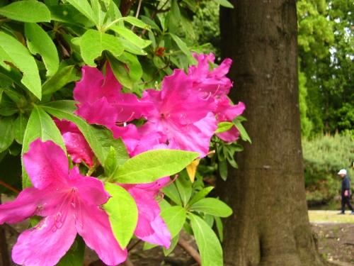 花の写真002