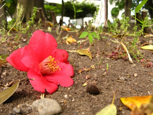 花の写真004