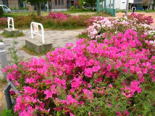 公園写真1