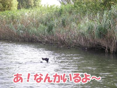 2006-8-20a.jpg
