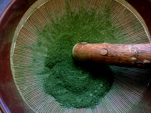 乾燥木の芽5