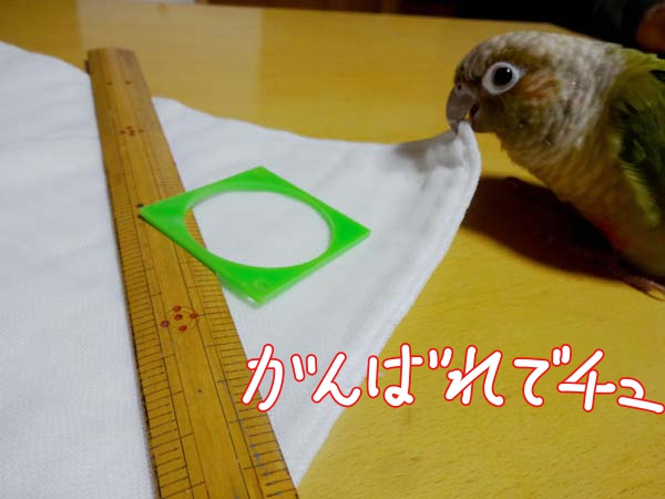 DSC05647.jpg