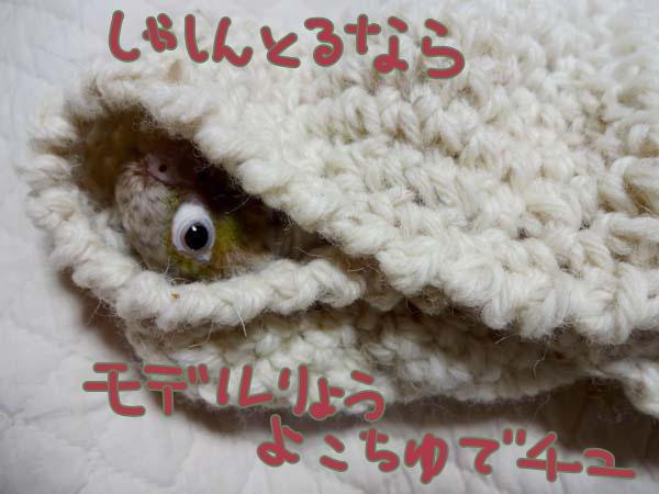 DSC05771m.jpg
