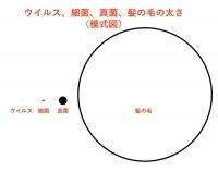 ウィルスの大きさの図