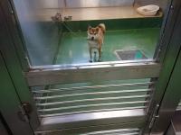 動物保護指導センターで保護されているイヌ