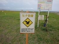 コアジサシ保護区の看板
