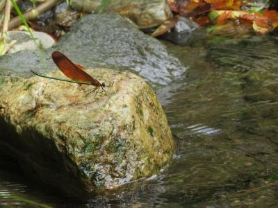 渓流の里6
