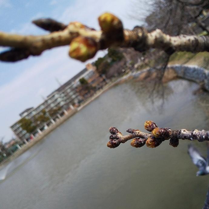 200318桜 (2)