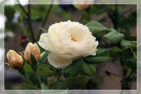 s-200813クレアオースチンIMG_6952