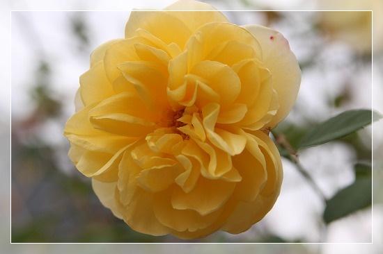 s-201117グラハムトーマスIMG_7144