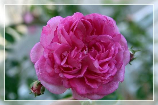 s-200524IMG_6720.jpg