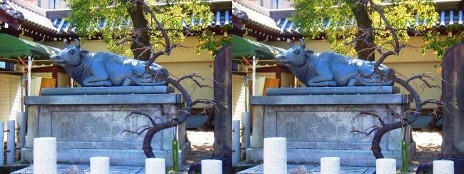 大阪天満宮 祭牛(交差法)