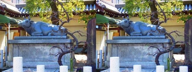 大阪天満宮 祭牛(平行法)