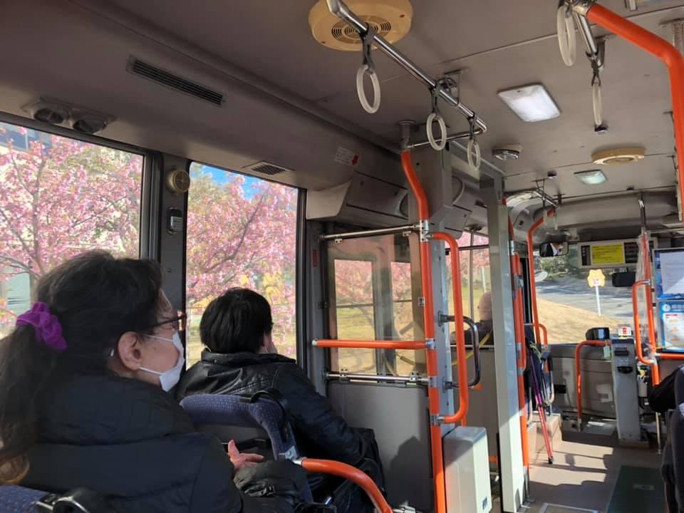 R30216南ルート車内から桜