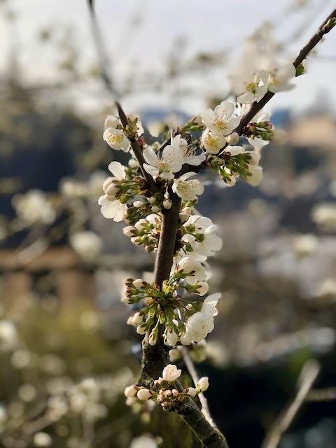 spring21-1