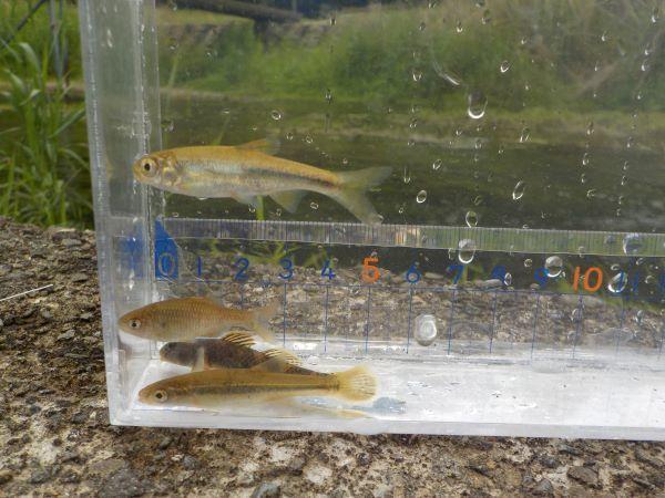 他の魚たち